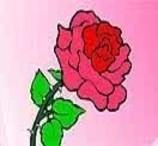 Colorir a Rosa